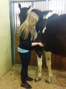 """ורד הראל - סטודנטית ללימודי וטרינריה בחו""""ל מטפלת בסוס במהלך לימודי בפקולטה לוטרינריה"""